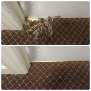 pet damaged carpet repair Louisville