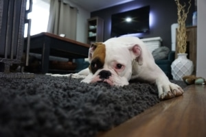 allergy friendly carpet cleaning